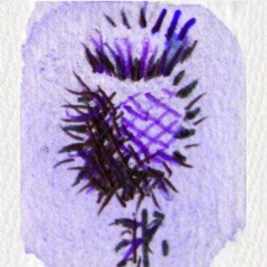 thistle has been Scotland's national emblem for centuries.